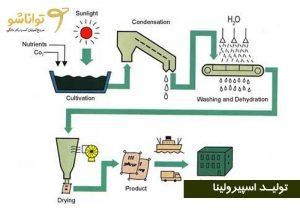 مراحل تولید جلبک