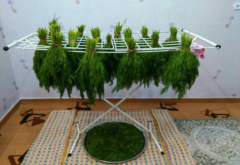 نحوه خشک کردن گیاهان دارویی